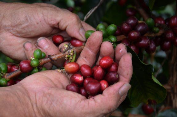 Conectividad en las zonas rurales cafeteras de Tolima